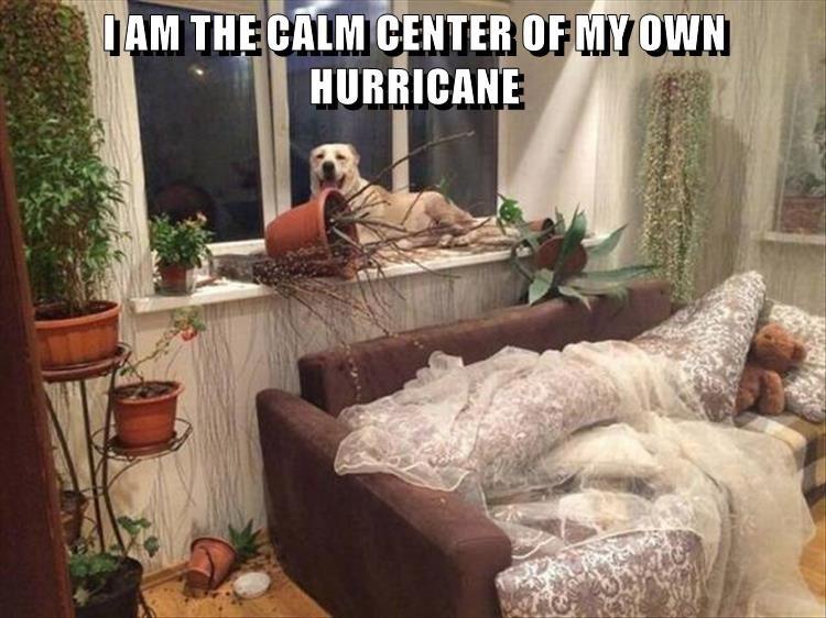 hurricane,dogs,own,caption,center