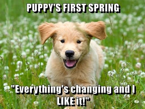 animals spring first puppy caption - 8772684032