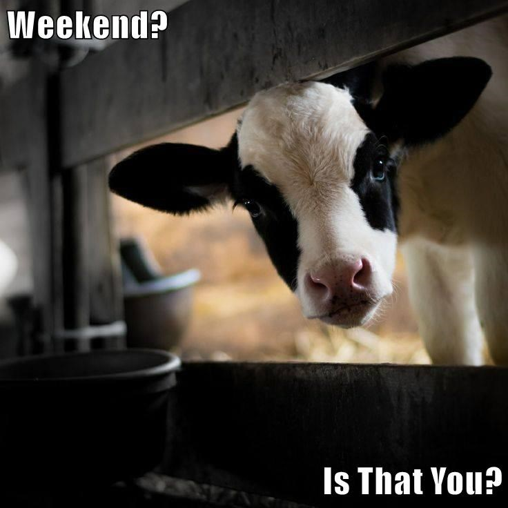 Weekend?  Is That You?