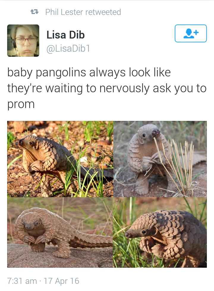 pangolin twitter image The Answer Is Yes.