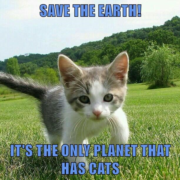 Earth Day kitten caption Cats earth planet - 8772881152