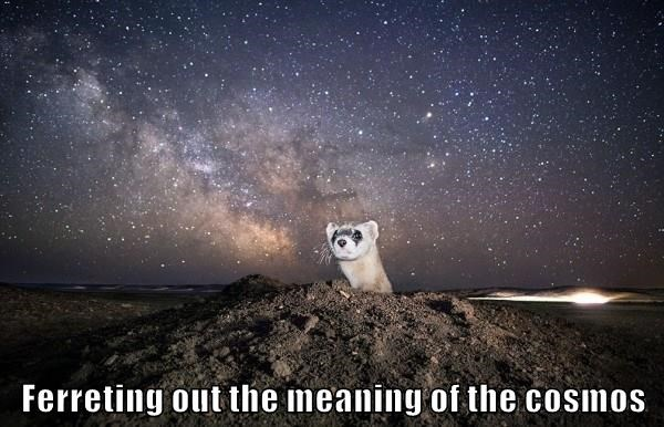 Ferreting out the meaning of the cosmos