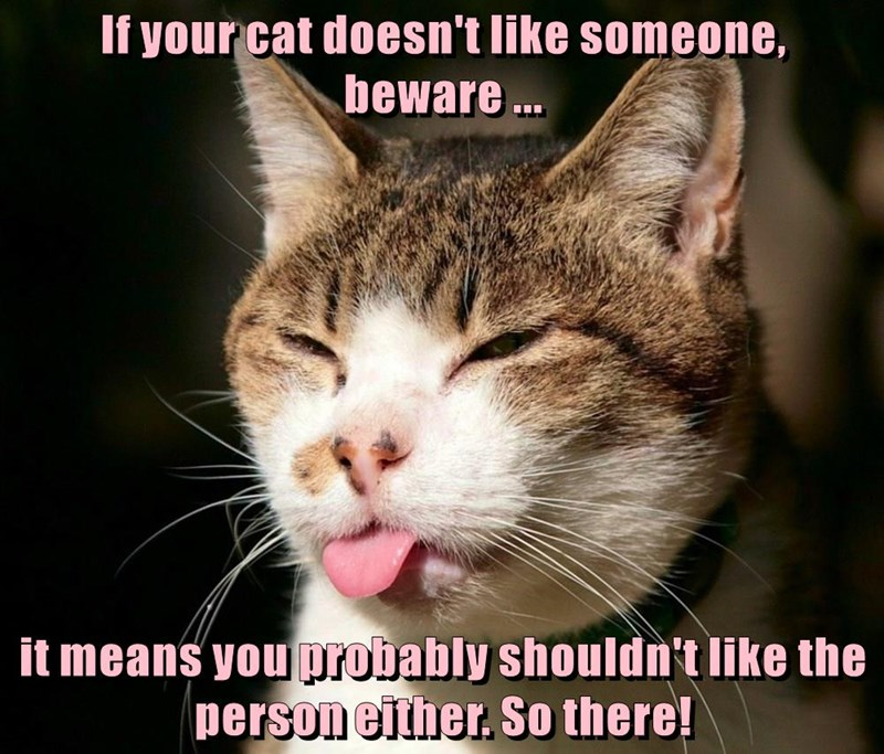 If your cat doesn't like someone, beware ...  it means you probably shouldn't like the person either. So there!