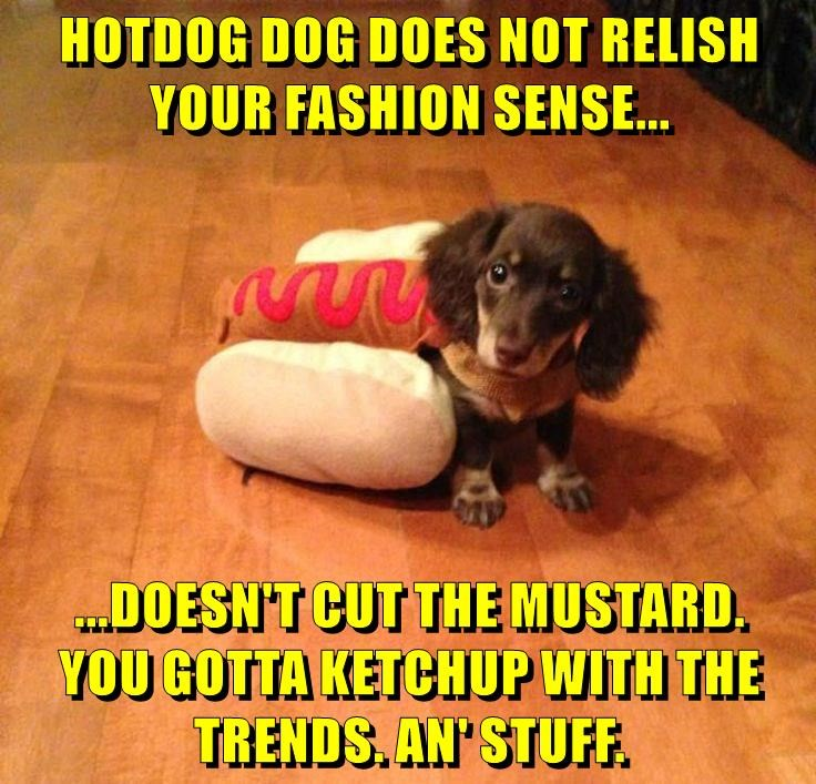 animals relish hot dog dogs caption - 8772996608