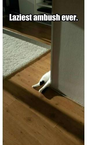 Laziest ambush ever.