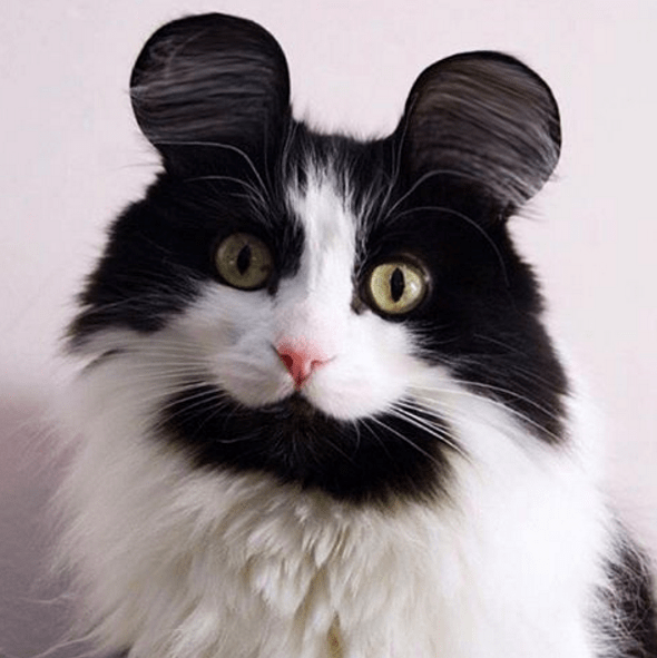 app lets you try mouse ears on different animals
