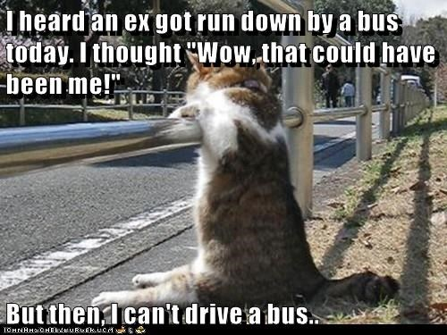 bus,Cats,drive,caption