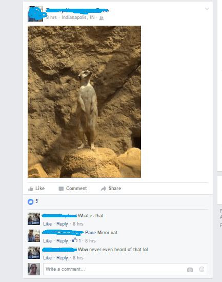 meerkat failbook facebook - 8773210880