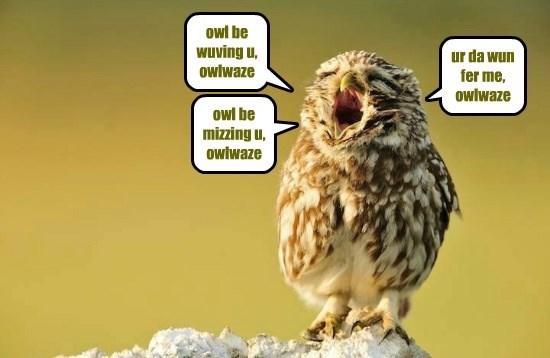 owl be wuving u, owlwaze
