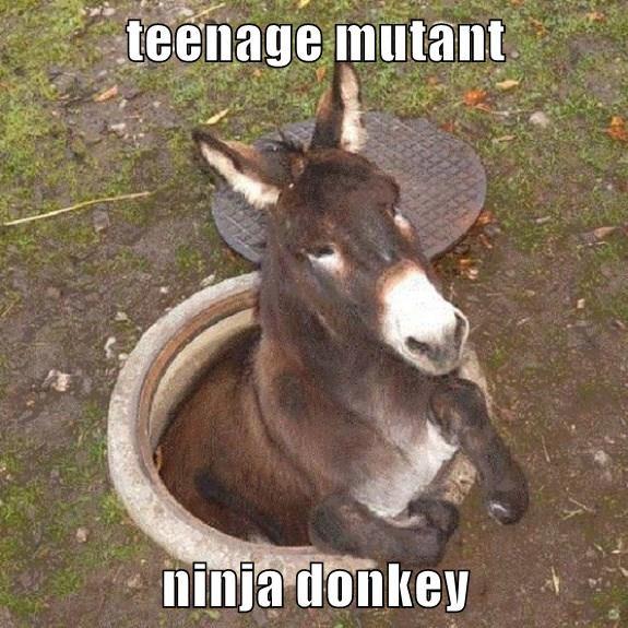 teenage mutant  ninja donkey