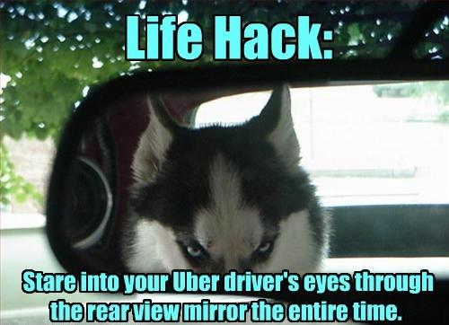 dogs mirror creepy husky Life Hack caption - 8773260800