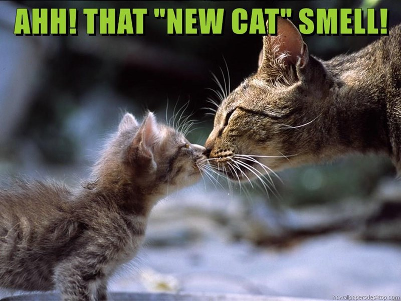 "AHH! THAT ""NEW CAT"" SMELL!"