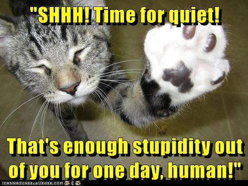 """SHHH! Time for quiet! That's enough stupidity out of you for one day, human!"""