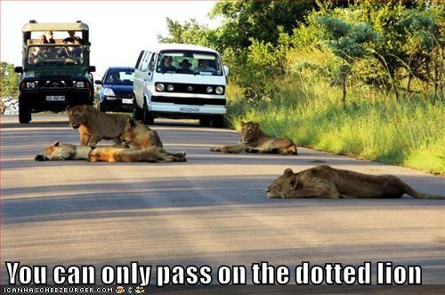 animals captioned lion dotted pass - 8773436928