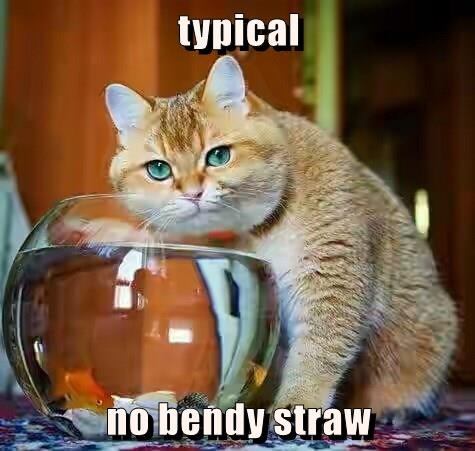 Cats,caption,fish,straw