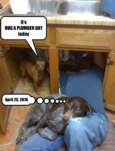 dogs,plumber,day,caption,hug