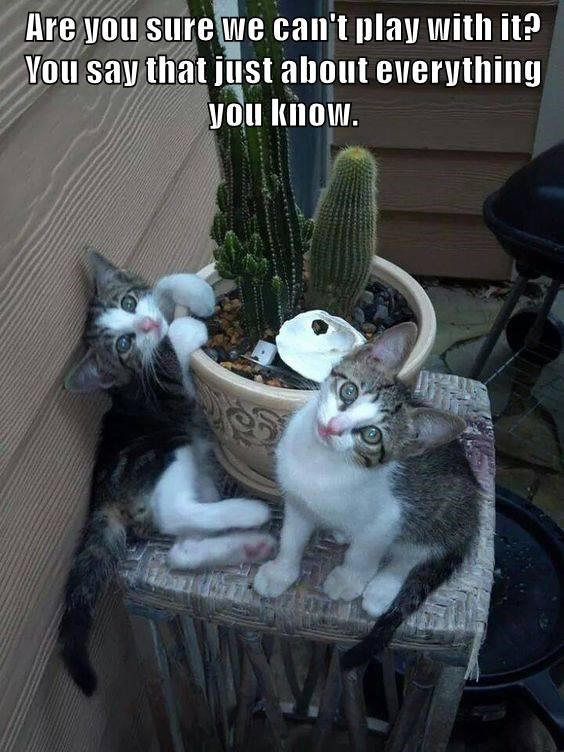 animals caption kitten cactus - 8773499392