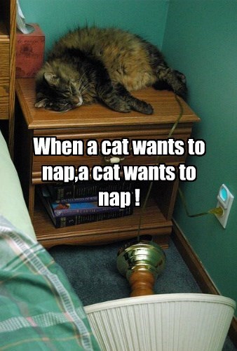 When a cat wants to nap,a cat wants to nap !