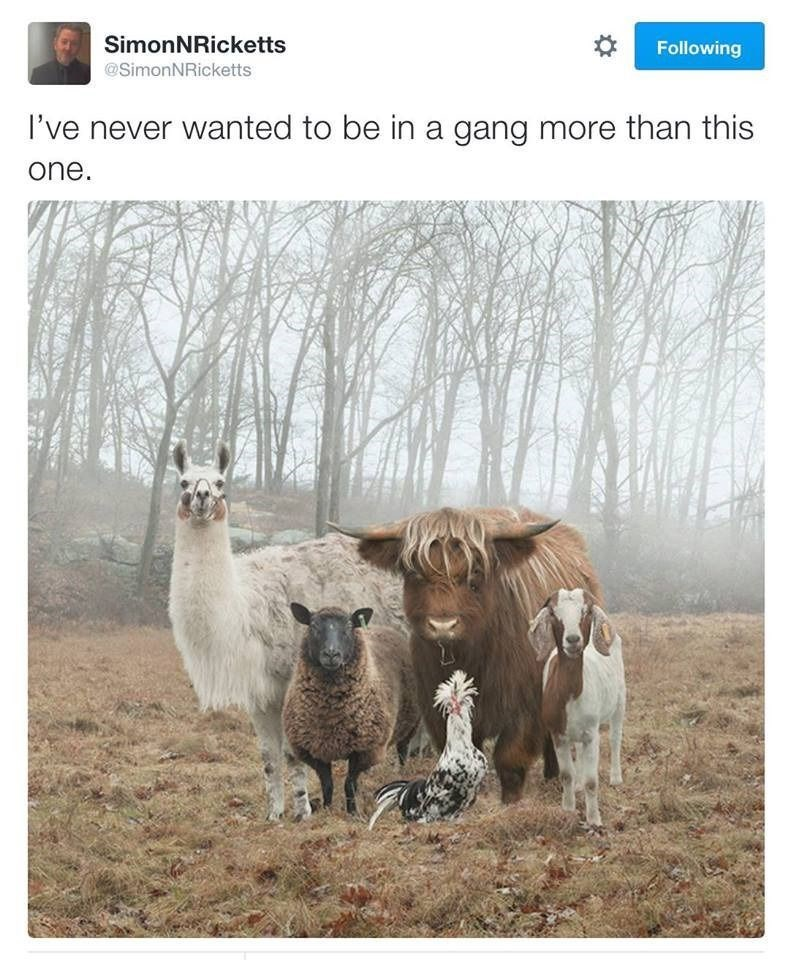 animals twitter gang They Look Really Tough
