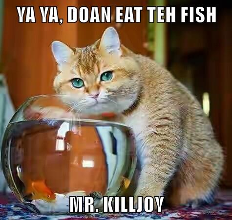 animals cat eat caption fish dont - 8773593344