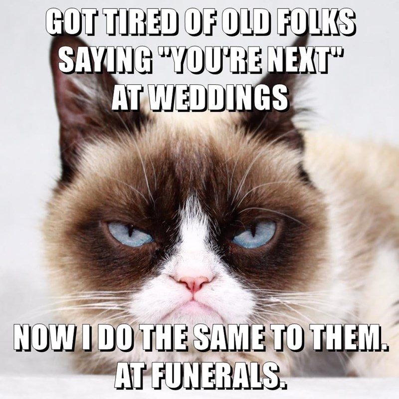 Cats,caption,funerals,weddings,Grumpy Cat