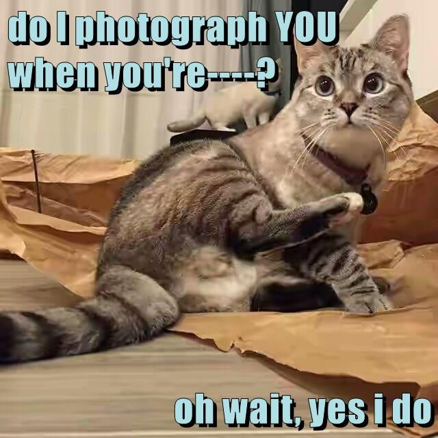 photograph caption Cats - 8773675008
