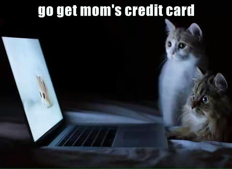 credit card,computer,mom,Cats