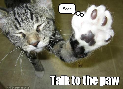 Cats,caption,paw