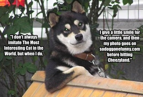 cat dogs imitate caption