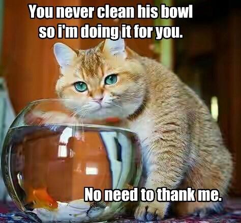 cat clean never caption bowl - 8773775360