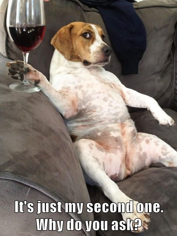dogs,wine,caption