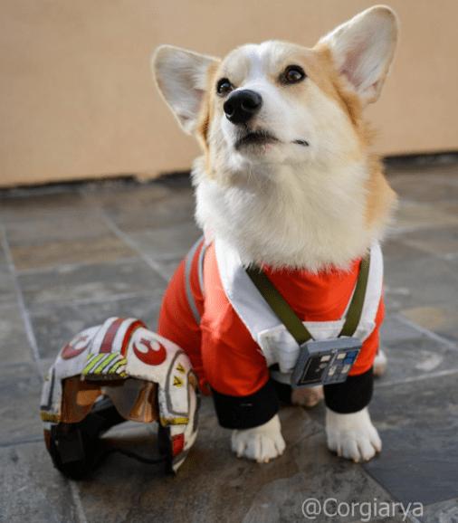 Dog - @Corgiarya