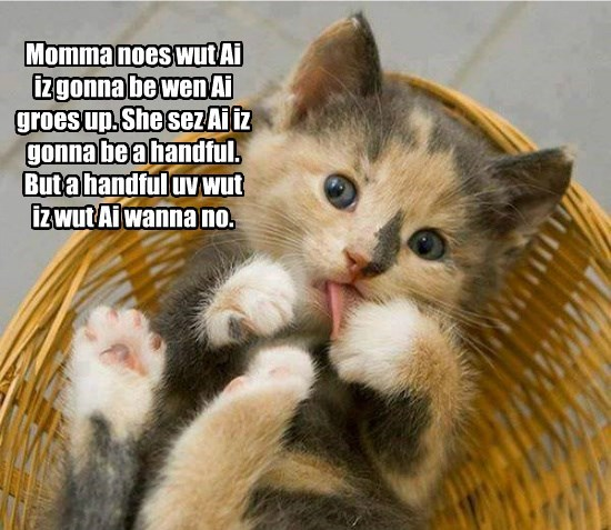 handful kitten caption Cats - 8773799936