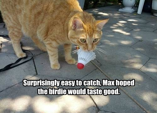 birdie caption Cats - 8773817856