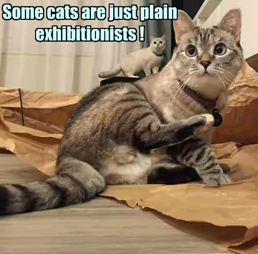 exhibitionists caption Cats - 8773825280