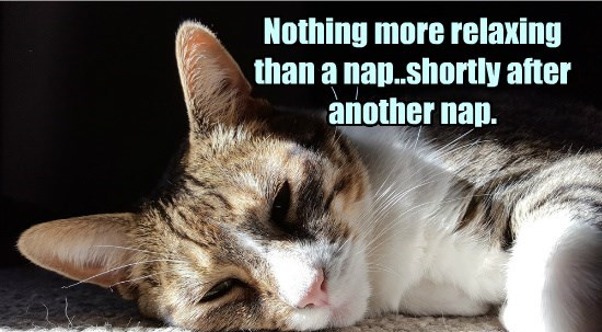 naps,caption,Cats