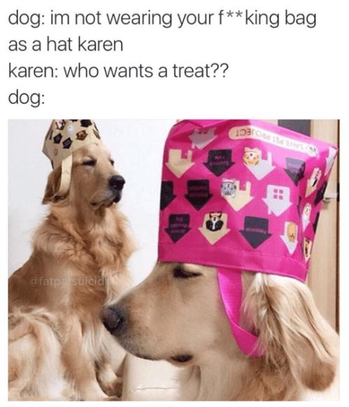 dogs image hats I Do