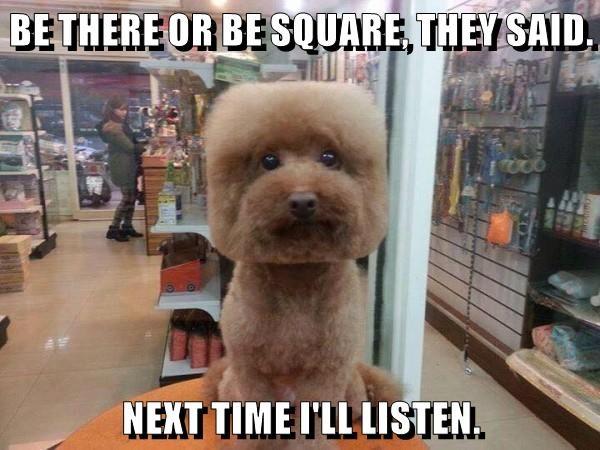 animals Square caption - 8773864704