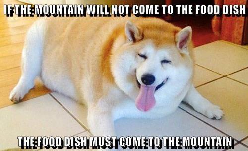 dogs,food,caption,mountain,dish