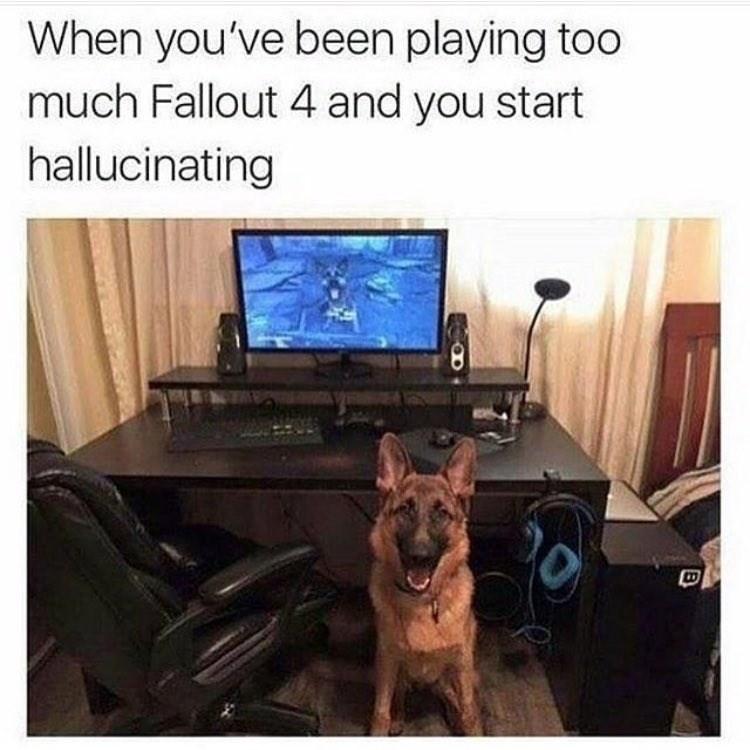 video-games-fallout-marathon-dogmeat-marathon