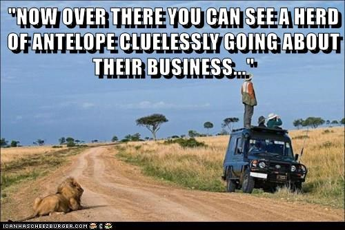 """NOW OVER THERE YOU CAN SEE A HERD OF ANTELOPE CLUELESSLY GOING ABOUT THEIR BUSINESS..."""