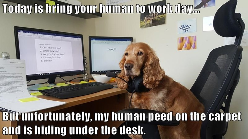 Today is bring your human to work day... But unfortunately, my human peed on the carpet and is hiding under the desk.