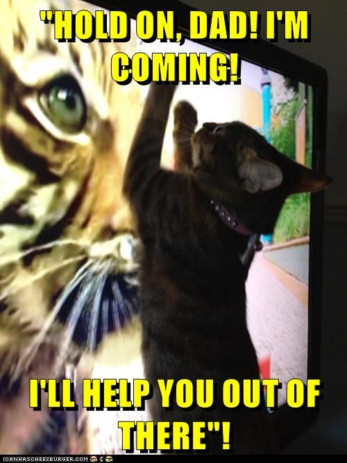 animals help TV caption Cats - 8773874688