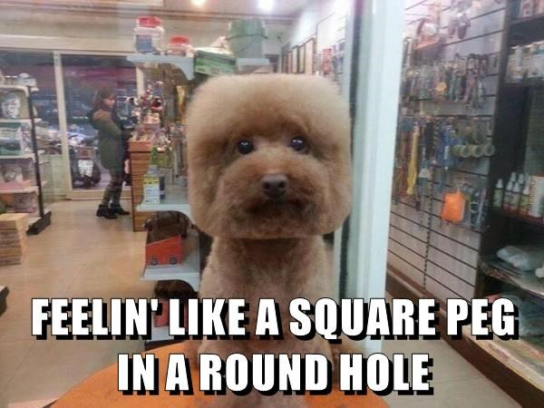 dogs,Square,hole,peg,round,caption
