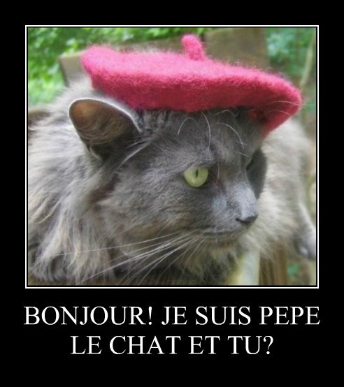 bonjour caption french Cats - 8773927680