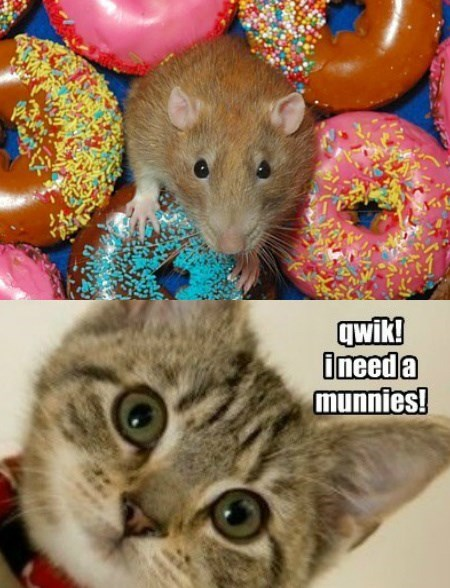 monies,donuts,caption,Cats,mouse