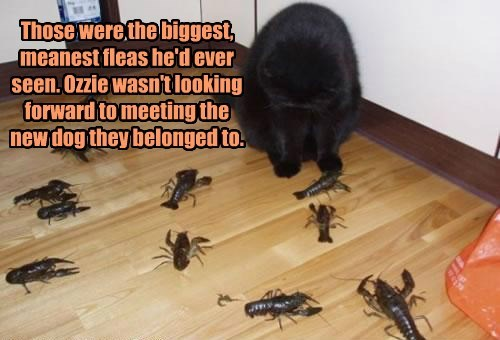 fleas,lobsters,caption,Cats
