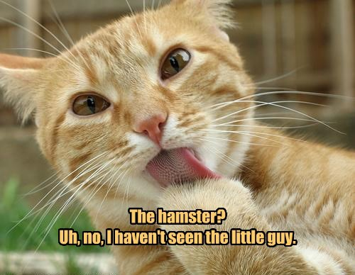 The hamster? Uh, no, I haven't seen the little guy.