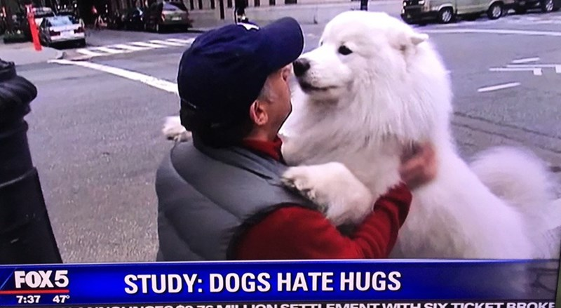 image dogs hugs The Most Depressing Study Claims That Dogs Hate Hugs