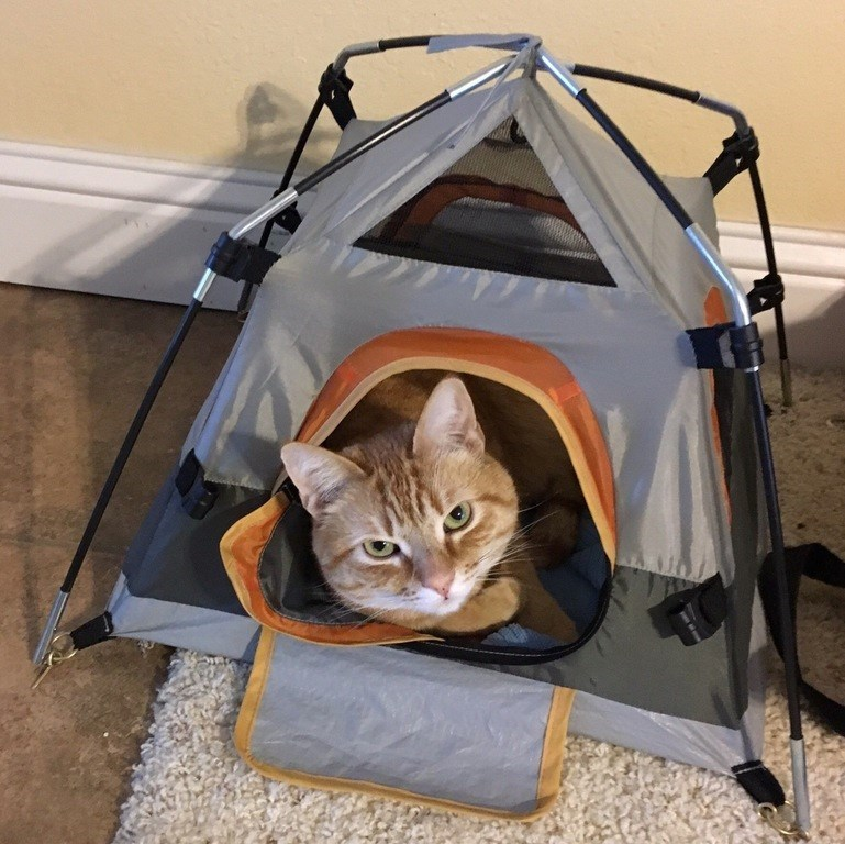 what is this a tent for cats